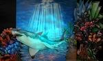 38-Underwater theme