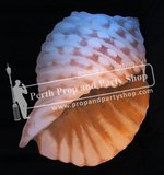 14-Conical Seashell