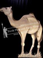 30-Standing Camel